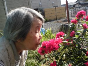 ≪特定≫庭のバラがキレイです